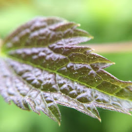 Leaf by Virginia Howerton - Nature Up Close Leaves & Grasses