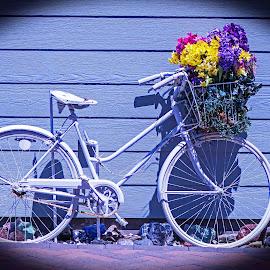 Bike Beauty by Will McNamee - Artistic Objects Antiques ( mcnamee2169@yahoo.com, dld3us@aol.com, gigart@aol.com, danielmcnamee@comcast.net, ronmead179@comcast.net, aundiram@msn.com )