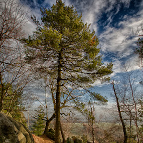 The mystic tree ! by Kai Buddensiek - Landscapes Forests ( baum, landschaft, elbsandsteingebirge, hdr, tree, wald, stone, forest, 16-35, landscape, elbe sandstone mountains, steine )