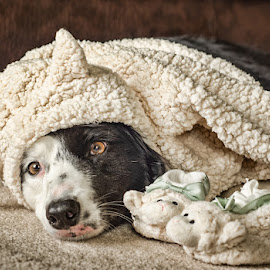 Sheepdog in Sheepès clothing by Cathy Abbott - Animals - Dogs Portraits