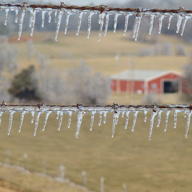 Ice on the fence  by Shelley Deckard - Landscapes Weather