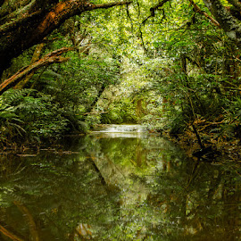 Tranquility by Martyn Cook - Landscapes Forests ( water, stream, forest, catlins, new zealand )