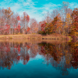 by Jeffrey Goodman - Landscapes Forests