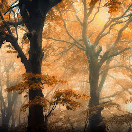 Rules by Jerry Kambeitz - Landscapes Forests ( thirds, trees, forest, light, sun )
