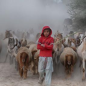 Shepard  by Abdul Rehman - Babies & Children Children Candids ( goats, pakistan, red, fog, rural life, dust, sheep, shepard, rural,  )