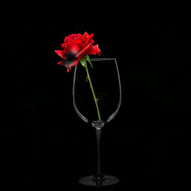 Bleeding Rose in a glass by Christy Stanford - Artistic Objects Still Life ( wine, rose, bleeding, red, glass, flower )