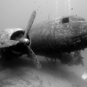 Dakota c-47 underwater by Rico Besserdich - Transportation Airplanes ( diver, underwater, black and white, airplane, wreck, sea, diving )