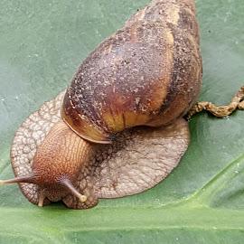 Snail by Daz Yates - Animals Other