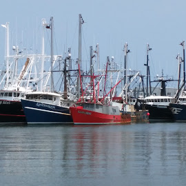 scallop boats by Carson Hynes - Transportation Boats ( lowcountry, scallop boat, coastal living, commercial fishing, maritime )