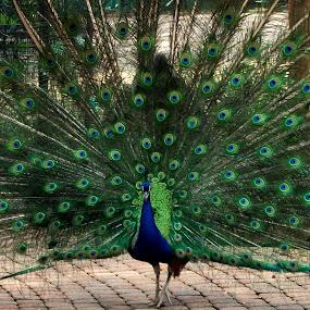 what a bird by Nicole Janse van Vuuren - Novices Only Wildlife