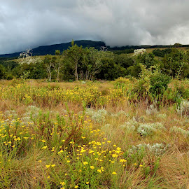 Mulanje Massif by DJ Cockburn - Landscapes Prairies, Meadows & Fields ( mulanje, mountain, forest, africa, malawi )