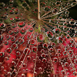 Life Reflections by Marija Jilek - Nature Up Close Other plants