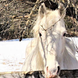 Dixie by Linda    L Tatler - Animals Horses