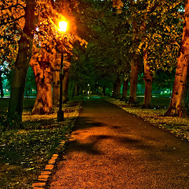 Midnight in Cambridge 4 by Joao Fernandes - City,  Street & Park  City Parks ( park, street, lamp, light, cambridge )