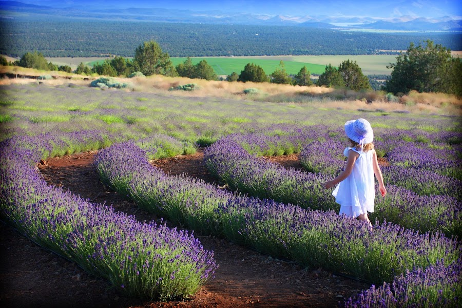 ~ A Stroll Thru The Garden ~ by LaWanda Wilson - Landscapes Travel ( siskiyou county, little girl, purple flowers, art, lavender farm, greeting cards, northern california lavender farms, scenic, greeting card, landscape, lavender, scented flowers, lavender farms, stroll, girl, westerncaptures.com, western captures photography, mt shasta lavender farm, scenery, flowers, landscapes, walk, flower )