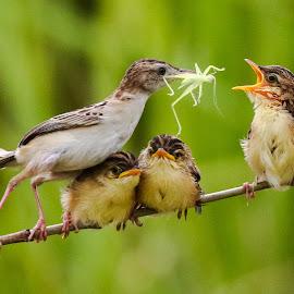 Big one kids.... by Bernard Tjandra - Animals Birds