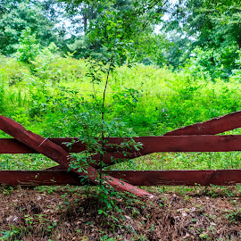 Broken Red Fence by Liam Douglas - Landscapes Forests ( broken, fence, wooden, red, green, trees, forest, leaves )