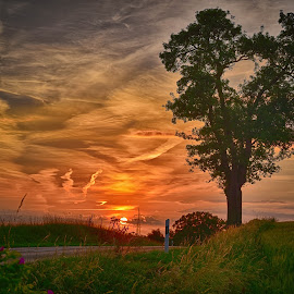 Love Tree Sunset by Marco Bertamé - Landscapes Sunsets & Sunrises ( love, orange, heart, tree, sunset, cloudy, summer )