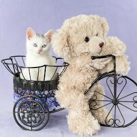 Ride Along  by Sondra Sarra - Animals - Cats Kittens ( kitten, cat, bike, purple, teddy bear, basket, adorable, baby, cute )