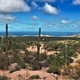 by Phil Bear - Landscapes Deserts ( hills, desert, mexico, beach, coast, sea of cortez, baja )