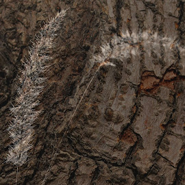 fossils by Prasanta Das - Abstract Patterns ( fossils, tree trunk )