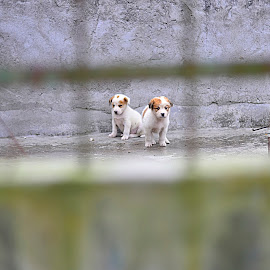 In frame by Kriswanto Ginting's - Animals - Dogs Puppies ( puppies, nikonshooter, dogs, indonesia, d3100, dog portrait, puppy, nikon, dog, puppy portrait,  )