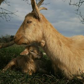by Ksenija Glavak - Animals Other