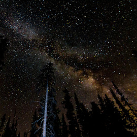 Milky Way Rise by Jeff Harmon - Landscapes Starscapes ( mountains, utah, stars, trees, night, landscape, starscape, galaxy, nightscape, milky way )