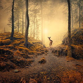 Last frontier of the forest by Caras Ionut - Digital Art Things ( mystery, ground, crow, dear, leaf, birds, corn, psd, sky, stairs, lightness, tree, autumn, mounting, path, working, grounds, rocks, light, man, photoshop, clouds, tutorials, green, cart, forest, reaven, manipulation, field, bird, fog, fly, tulip, fountain )