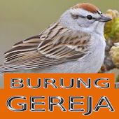 Master Kicau Burung Gereja APK for Bluestacks