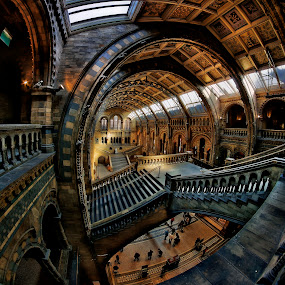 by Richard  Harris - Buildings & Architecture Other Interior ( uk, london, natural history museum )