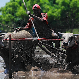Left hand stick racing by Deny Afrian Wahyudi - People Portraits of Men ( race, culture, animals, people, human interest )