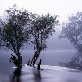 Water 'N' Tree by William Greenfield - Landscapes Waterscapes ( water, reflection, tree, fog, shrub, river, mist )