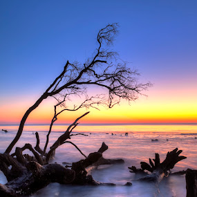 driftwood in ocean at sunset by John Wollwerth - Landscapes Waterscapes ( nobody, colorful, waterscape, silhouette, time exposure, ocean, flow, atlantic, landscape, driftwood, nature, tree, tide, copy, water, orange, hdr, sea, horizon, south carolina, blue, sunset, sunrise, natural, room )
