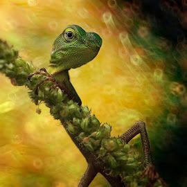 by Rifa PhotoArt - Novices Only Wildlife