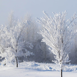 Silver Frost by Chad Roberts - Nature Up Close Trees & Bushes ( gray sky, winter, cold, fog, silver, snow, frost, morning, frozen )