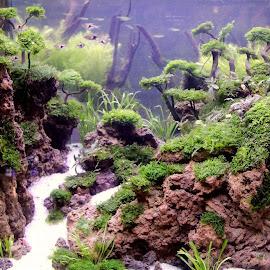 Aqua Scape by Muh Maulana - Nature Up Close Water (  )