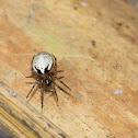 Unknown spider