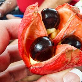 Acai by Deborah Russenberger - Food & Drink Fruits & Vegetables ( fruit,  )