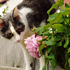 Toby by Andreea Mihailiuc - Animals - Cats Portraits ( cat, pink, flower )