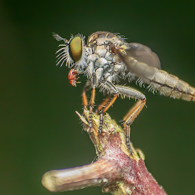 by John Wyne James - Animals Insects & Spiders (  )