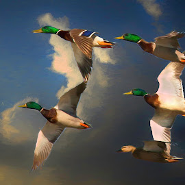 Free! by William Underwood  - Digital Art Animals