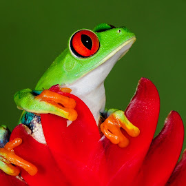 by Terry DeMay - Animals Amphibians