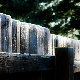 Frost on the early morning fence! by Bob Wikert - Landscapes Weather