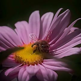 Save the Bee's by Susan Hartman - Uncategorized All Uncategorized ( pink flower, macro, bee )