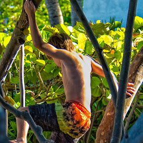 Boy climbing tree by Steven Greenbaum - People Street & Candids ( bal harbor )