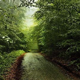 Cesta by Jan Kvasnica - Landscapes Forests ( ráno, barevné, keře, cesta, stromy, mlha )