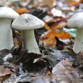 by Anja Kroes - Nature Up Close Mushrooms & Fungi ( ockenburgh, mushroom, herfst )