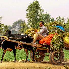 by Mohsin Raza - Transportation Other (  )