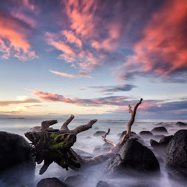 Ghost Log by Steve Badger - Landscapes Beaches ( waterscape, sunset, long exposure, beach, log,  )